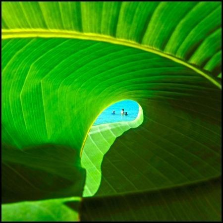 The beach through a banana leaf Photo by Algis Kemezys — National Geographic Your Shot