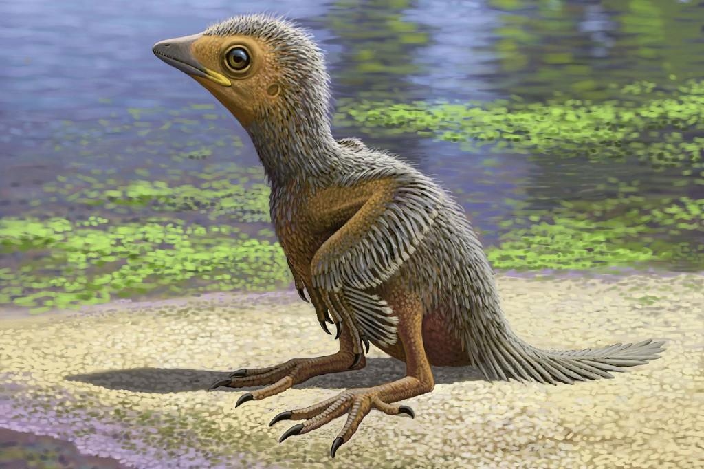 Rare Baby Bird Fossil Found in Dino-Era Rock