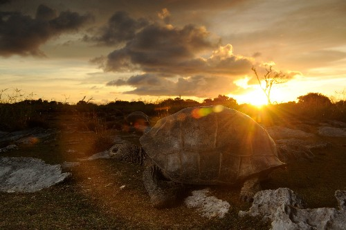 Photographing Giant Tortoises on an Island That Wants to Kill You