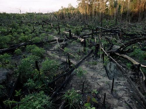 Rain Forest Threats