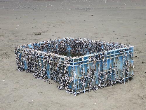 Invasive Species Are Riding on Plastic Across the Oceans