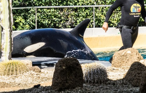 SeaWorld Orca Was Trying to Save Itself, Not Kill Itself