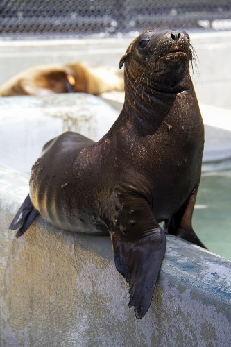 Record Number of Seals and Sea Lions Rescued in California