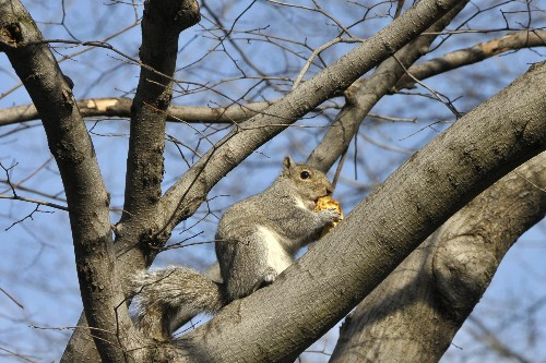 How many squirrels live in NYC's Central Park? We finally have the answer.