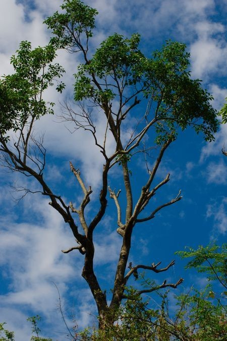 The Blue Sky Photo by Aleen Mukherjee — National Geographic Your Shot