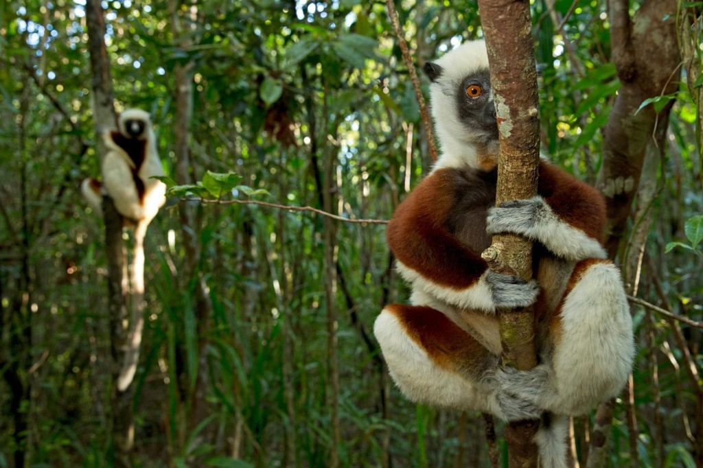 Madagascar's tourism drought could fuel another crisis