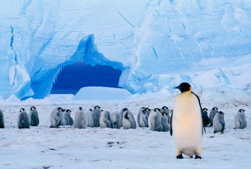 Nations to Designate Antarctic Marine Protected Areas?