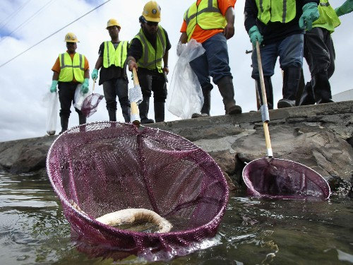 Hawaii Molasses Spill: Better or Worse Than Oil?