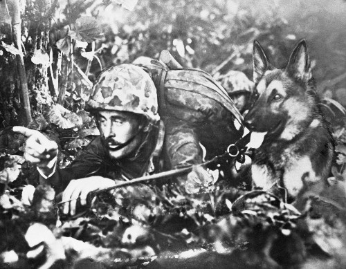Dogs at War: Caesar, One of the First Marine Dogs in the Pacific