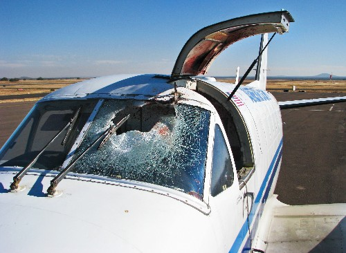 Bloody Skies: The Fight to Reduce Deadly Bird-Plane Collisions