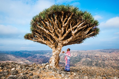 Can Socotra, Yemen's 'Dragon's Blood Island,' be saved?