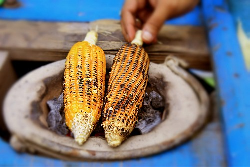 Your Shot: Corn Is King for Creatures Great and Small