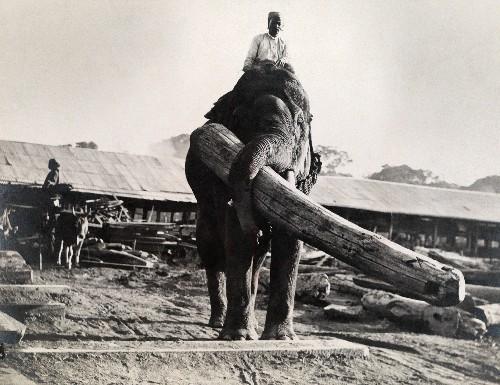 How Burmese Elephants Helped Defeat the Japanese in World War II