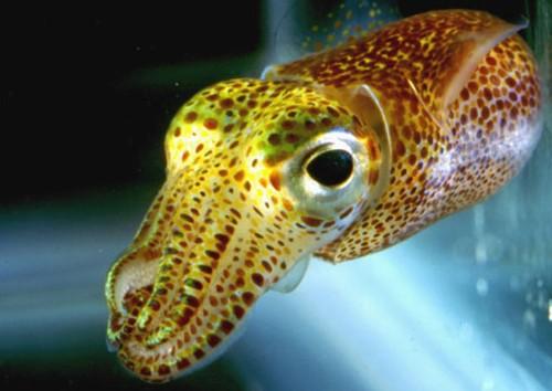 How To Terraform A Squid