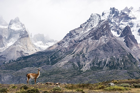 Patagonia Dreaming: Adventures in Torres del Paine