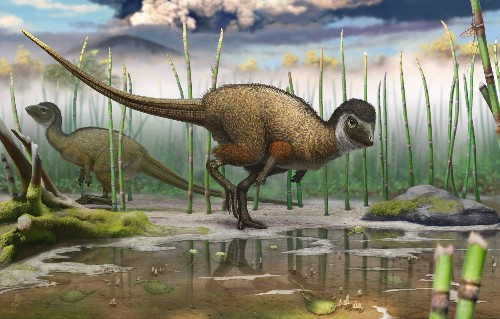 Siberian Discovery Suggests Almost All Dinosaurs Were Feathered