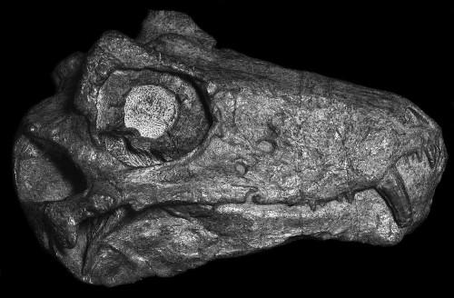 Our Prehistoric Cousins Had Demonic Skulls