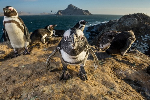 How penguins show their smarts