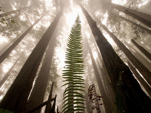 Everything to know about Redwood National and State Parks
