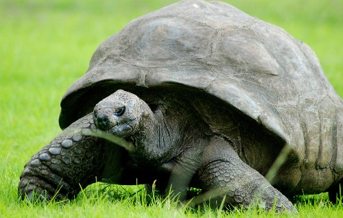 Healthy Diet Helps 183-Year-Old Tortoise Feel Young Again