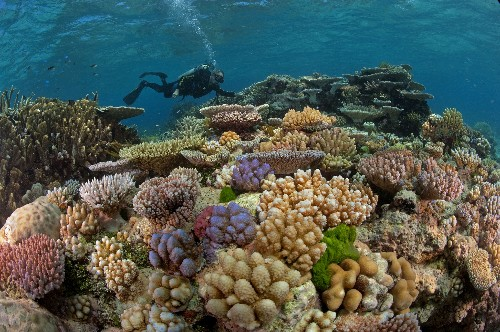 Coral Reefs Could Be Gone in 30 Years