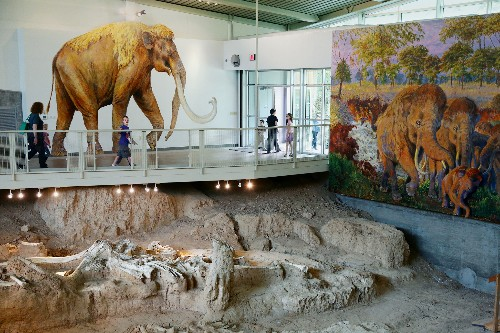 Mammoth Bones Displayed in Texas Where They Were Found