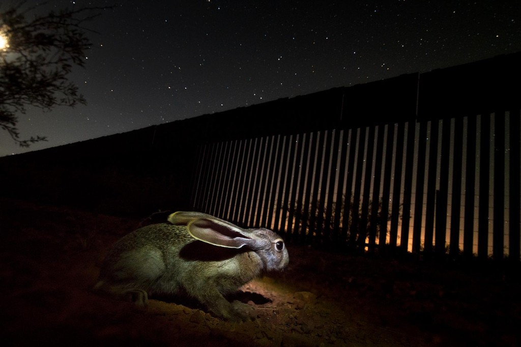 Border wall construction expands, despite pandemic, imperiling jaguars and other animals
