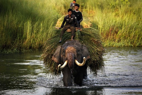 Captive Elephants Freed From a Life in Chains