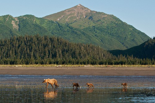 Explore the Alaskan Wilderness in This Huge National Park