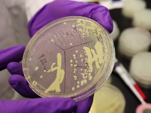 Scientists Move Closer to Inventing Artificial Life