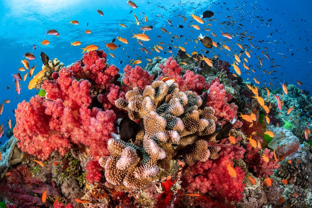 Scientists are trying to save coral reefs. Here's what's working.