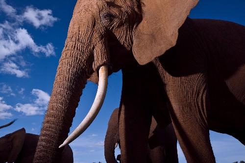 Elephant Requiem & RHINOS TOO! - cover