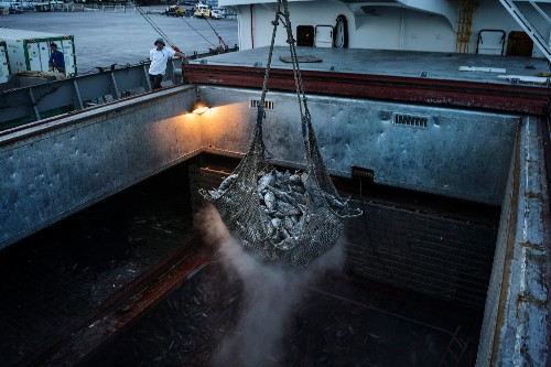 One of the World's Biggest Fisheries Is on the Verge of Collapse