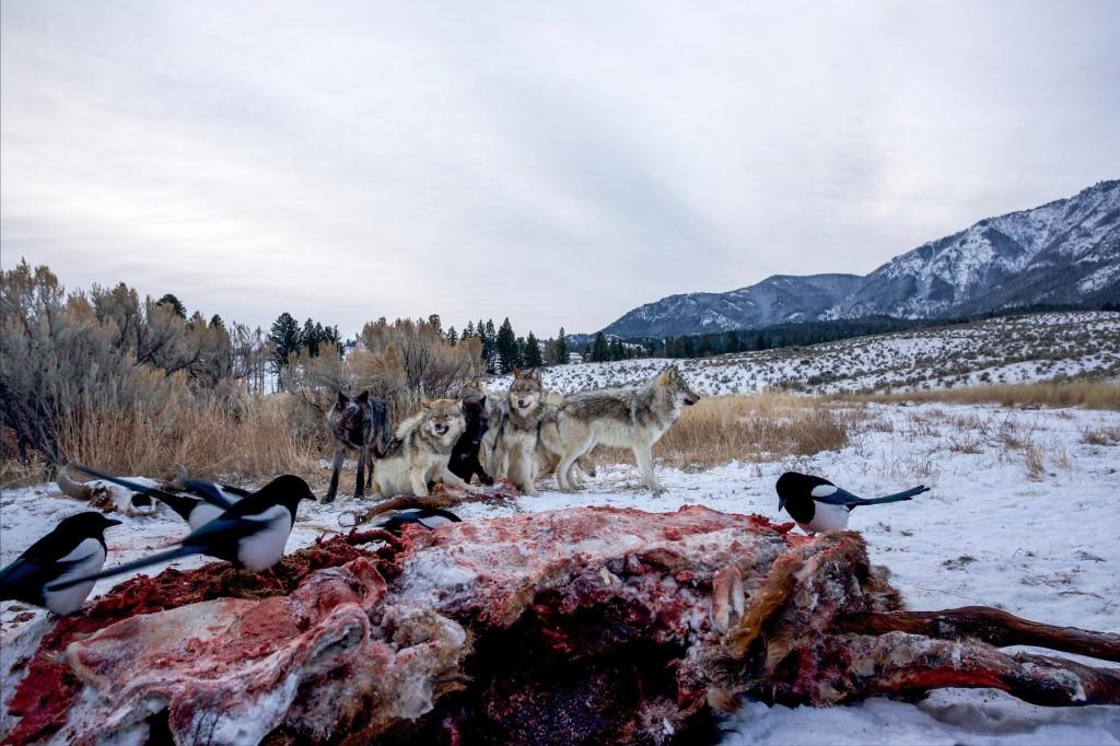 Does prey benefit from predators?