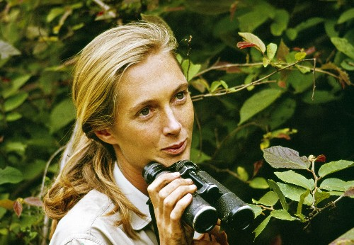 Jane Goodall, how a woman redefined mankind