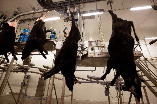 Inside a Russian Slaughterhouse, It's a Far Cry From 'The Jungle'