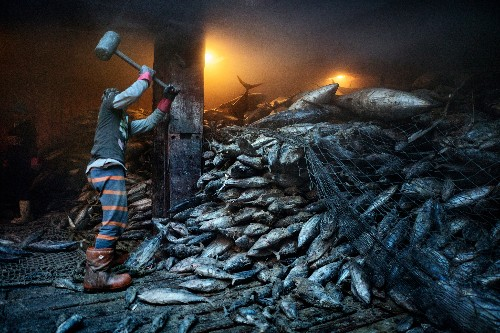 The sea is running out of fish, despite nations' pledges to stop it