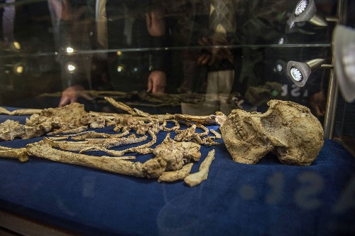 3.6-Million-Year-Old Human Ancestor Unveiled to Public