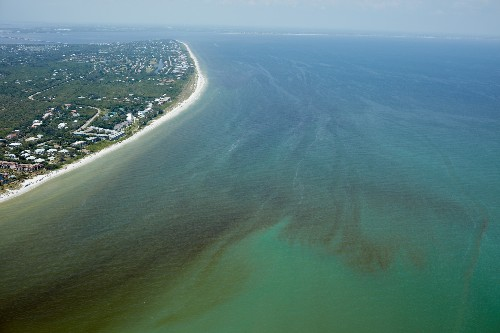 Red Tide Is Devastating Florida's Sea Life. Are Humans to Blame?