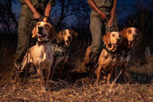 Texas hounds chase down rhino poachers in South Africa