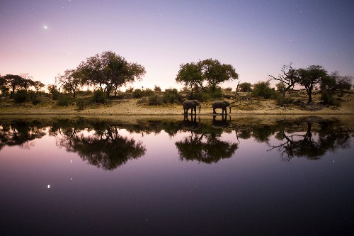How to film hippos, crocs, and lions and not lose a limb or a camera operator