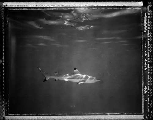 See Sharks Pose for Underwater Polaroids