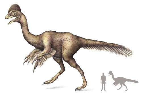 "New ""Chicken From Hell"" Dinosaur Discovered"
