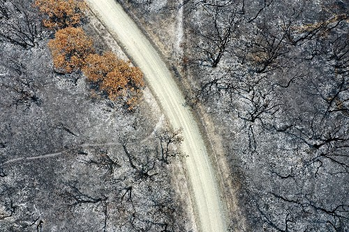 Wildfires have spread dramatically—and some forests may not recover