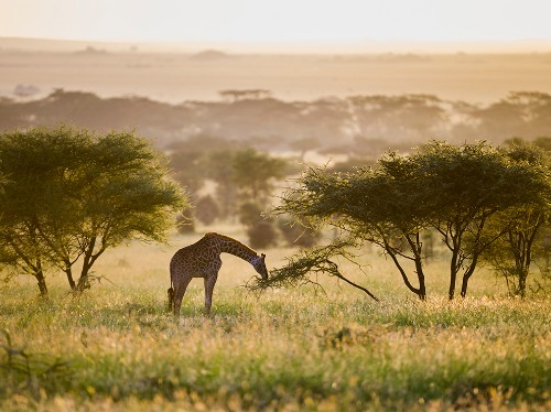 Best Tours in Africa 2015