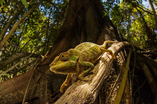 New 'smart' skin changes color using a trick learned from chameleons