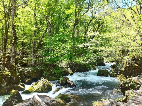 Eight Things That Can Only be Seen in Japan's National Parks