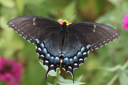 Wing span Photo by David Bohrer — National Geographic Your Shot