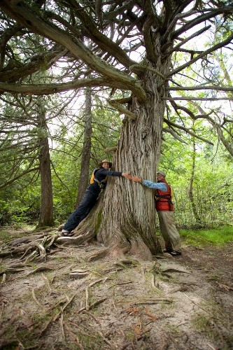 Paddle to DC: Visiting Basswood Lake's Ancient Cedar