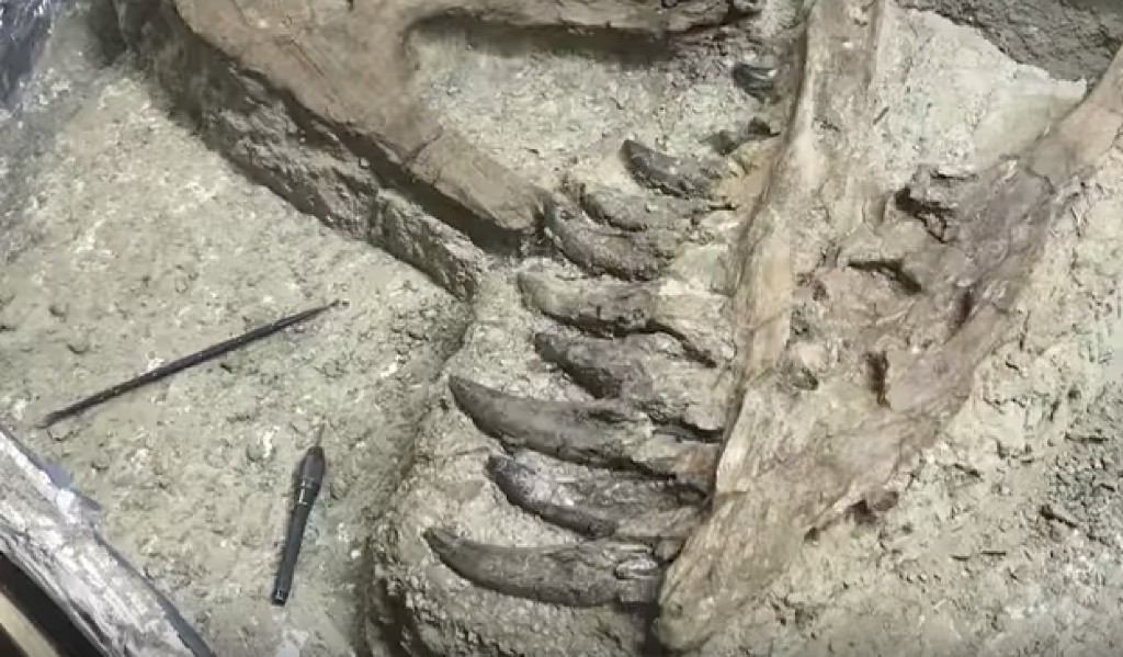 Is This Fossil a Baby T. Rex or a Controversial 'Nano' Dinosaur?